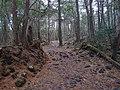 Aokigahara Forest (10863465773).jpg