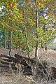 Appleslade Inclosure, New Forest National Park - geograph.org.uk - 1018798.jpg