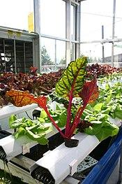 Aquaponics with Vibrantly Colored Plants.jpg