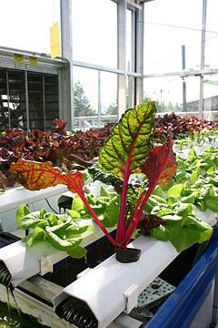 Aquaponics with Vibrantly Colored Plants.jpg