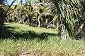 Araguainha - State of Mato Grosso, Brazil - panoramio (105).jpg