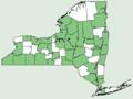 Arisaema triphyllum ssp stewardsonii NY-dist-map.png