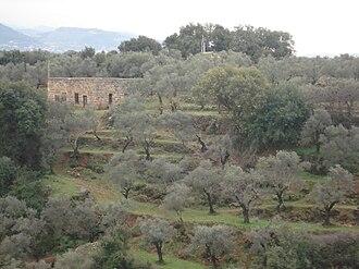 Asnoun - Asnoun's olive trees.