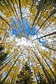 Aspen Sky (4446695252).jpg