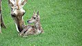 Assiniboine Park Zoo, Winnipeg (480514) (9445051789).jpg