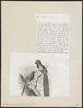 Astrapia nigra - 1872 - Print - Iconographia Zoologica - Special Collections University of Amsterdam - UBA01 IZ15800003.tif