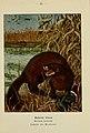 Atlas de poche des mammifères de France, de la Suisse romane et de la Belgique (Pl. 35) (6312168938).jpg