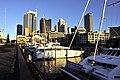 Auckland 18.jpg