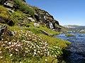 Aurland sommervejen - panoramio.jpg