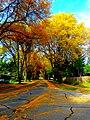 Autumn in Madison - panoramio (5).jpg
