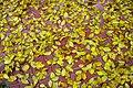 Autumn in iran پاییز در ایران- استان قم 09.jpg