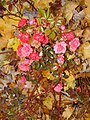 Autumn roses in the park - panoramio.jpg