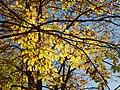Autunno - autumn - jesień - otoño (11798867226).jpg