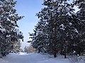 Avtozavodskiy rayon, Tolyatti, Samarskaya oblast', Russia - panoramio (202).jpg