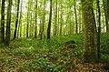 Bärlauch und Moose im Unterholz der Dobelwiesen (Schonwald).jpg