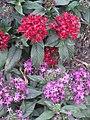 BCBG Flowers 03.JPG