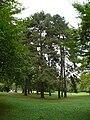 Bad-homburg-kurpark-flora-0090.jpg