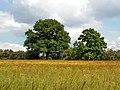 Baddesley Clinton - panoramio (11).jpg