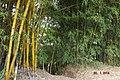 Bambu - panoramio (3).jpg