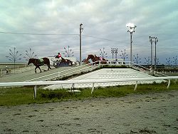 Ban'ei horses at Obihiro Racecourse