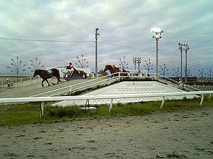 Obihiro, Hokkaido - Ban'ei horses at Obihiro Racecourse