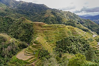 History of the Philippines - The Ifugao/Igorot people utilized terrace farming in the steep mountainous regions of northern Philippines over 2000 years ago.