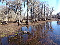 Banks Lake 2015 water lowered to control coontail moss 6.JPG