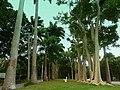 Barbados, Karibik - Farley Hill House - Park - panoramio (1).jpg