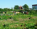 Baxter Road allotments, E16 - geograph.org.uk - 896068.jpg