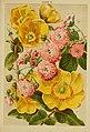 Beautiful flowering trees and shrubs for British and Irish gardens (1903) (20350260152).jpg