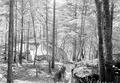 Befestigungsanlagen im Wald - CH-BAR - 3238682.tif