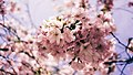 Beginnings of Spring (Unsplash).jpg