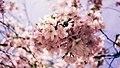 Beginnings of Spring (Unsplash).jpg