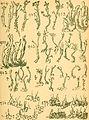 Bericht des Naturwissenschaftlichen Vereins für Schwaben und Neuburg (a.V.) in Augsburg (1908) (19743166164).jpg
