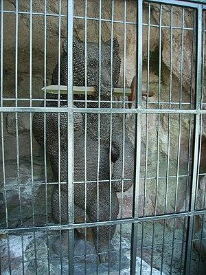 Nail Men - The Berndorf Nail Bear in his cage