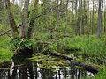 Białowieża National Park, Poland (4664692524).jpg