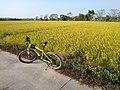 Bicycle in Kaiping.jpg