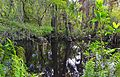 Big Cypress Bend Boardwalk 2.jpg