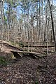 Big Hill Pond State Park trail 10.jpg