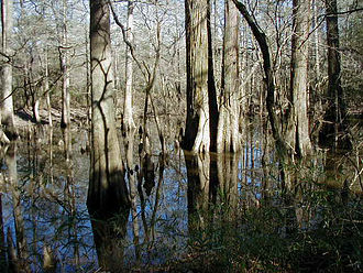Big Thicket - Image: Big thicket