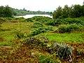 Bigland Hall Trout Fishery - geograph.org.uk - 94633.jpg