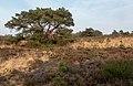 Bij Velp, boom op het veld bij de Driesprong IMG 4752 2020-04-16 19.11.jpg