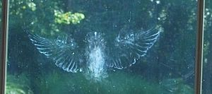 Faint white outline of bird's outstetched wings and body on windowpane
