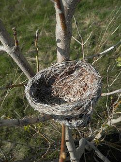 Bird Nest - Guelph.jpg