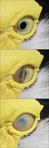File:Bird blink-edit2.jpg