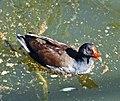 Bird in Santander.jpg