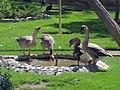 Birds Garden of Isfahan (23).jpg