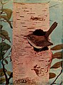 Birds and nature (1905) (14755288922).jpg