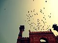 Birds over the Badshahi Mosque.jpg
