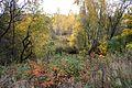 Biryulyovskiy Arboretum 03.jpg